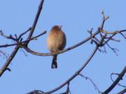 Monthly Bird Walks