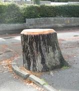 BRISTOL TREES IN CRISIS!