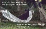Sabbath Bear 2