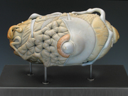 CALL 4 ENTRIES: The Art of Fine Craft, A National Juried Exhibition