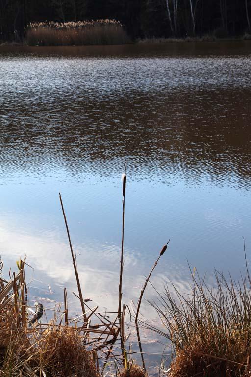 Hársas tó (5)