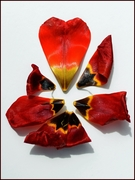 Valentine Explosion