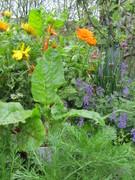 Kilburn Tube Station gardening