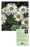 Promotional package: Daisies