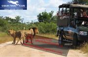 Cape Town Safari Tours  - Kabura Travel Tours