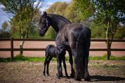 animal-photography-animals-barn-634612