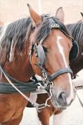 animal-brown-close-up-171256