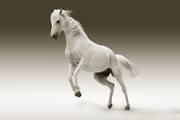 Horse names Farmpally.com