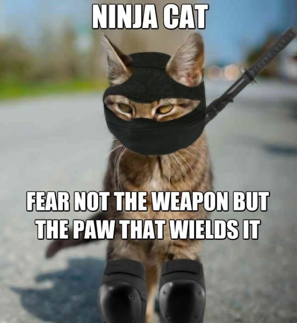 Meme-Ninja-Cat-Fear-Not-The-Weapon-But-The-Paw-That-Wields-It-Image