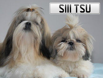 SHIH TSU car reg