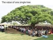 Study Beneath the Tree