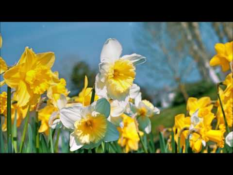 Wonderful Spring - Relax Music