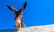 donkey-5 2