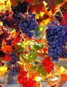 *Colores de Octubre*