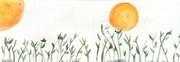 LAURA URBANO fleurs et soleil USA