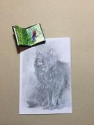 Pencil cat and tiny bird book