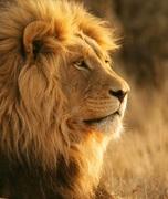 PFN LION 3