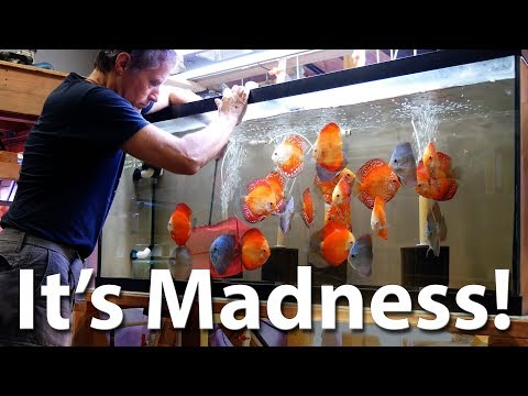 Discus Showroom Tour - Discus Madness, Inc.