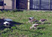 Birds in a neighbors yard.