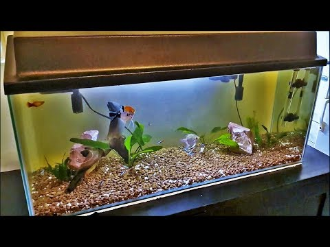 I waited 3 years for my 100L Planted Aquarium: 30 Gallon Fish Tank Overview