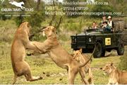 Day Tours in Cape Town - Kabura Travel Tours