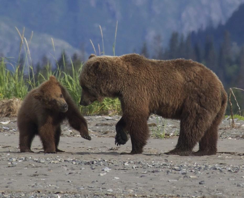 Abler-bears-12