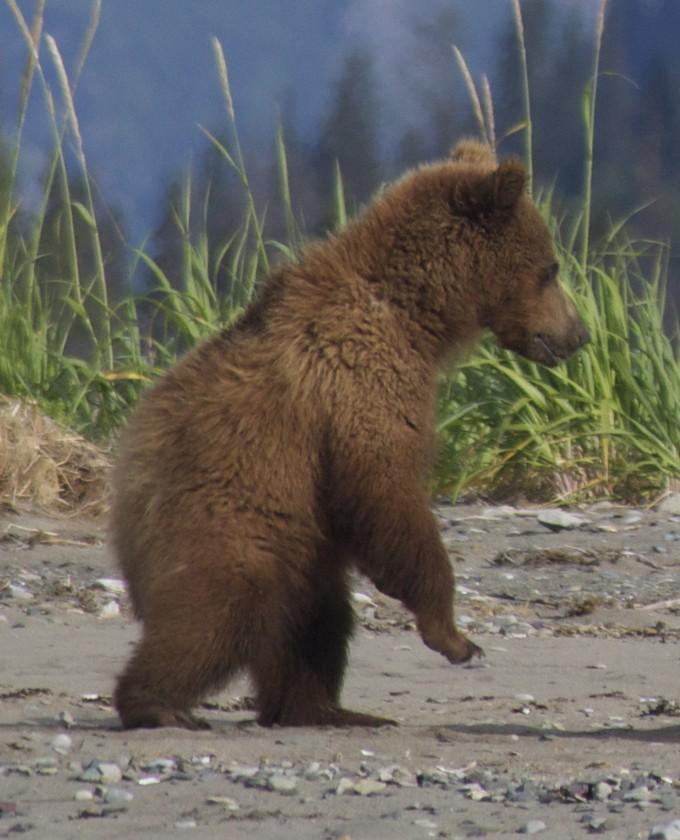 Abler-bears-16 (1)
