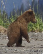 Abler-bears-16