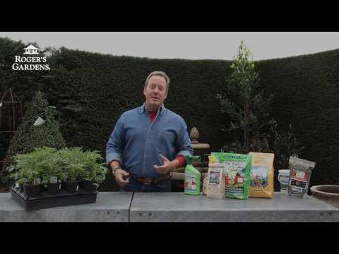 Everything You Need to Grow Great Tomatoes with Scott Daigre