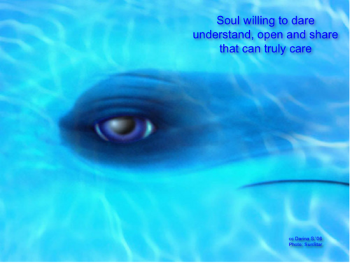 DolphinEyeSoul