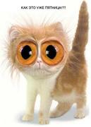 Weird Eyes Cat