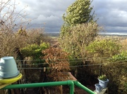 new plant pots on a windy day