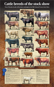 CattleBreeds