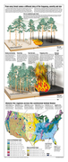 Forest management for fire