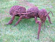 honingbij vanorbeek art