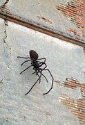 spin vanorbeek