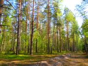 Мещерский смешанный лес