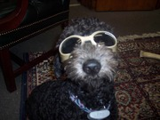 Mowgli Too Cool!, Make Way for Doodles!