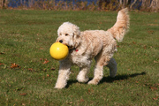 Emmie playing ball