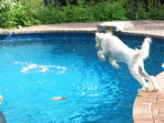 Bristow diving into the pool