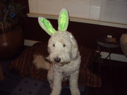 Pedro, the (very reluctant) Easter bunny