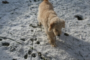 Hope loved our first dusting of snow~