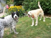 Lily Doodle and her sister Molly...