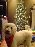 2012 Christmas with Swiffer