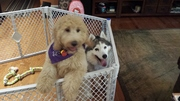 """Play date with """"aunt"""" Cassidy"""