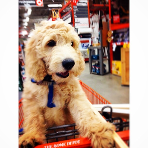 Merlin's first trip to Home Depot