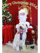 Merry Christmas Doodle Family!