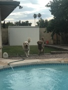 Race to the Pool