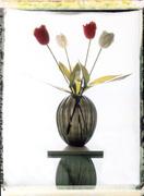 tulipani e febbre prima e dopo 2