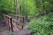 Loamhole Brook, Ironbridge